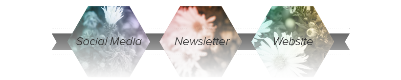 Example pathway for Newsletter Marketing